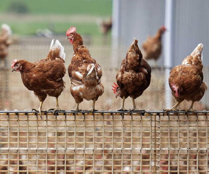 EU farming policy failing to fight climate change, auditors say
