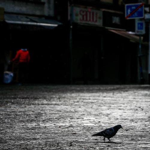 Belgian racing pigeon sells for world record 1.6 million euros