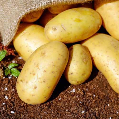 EU to allow post-Brexit UK farm produce exports