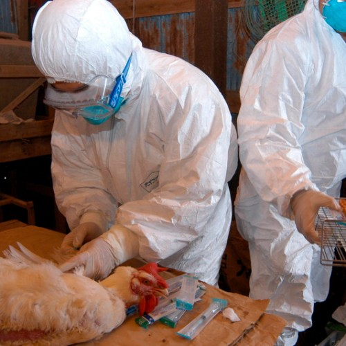 China's suspends poultry imports from Ireland due to bird flu