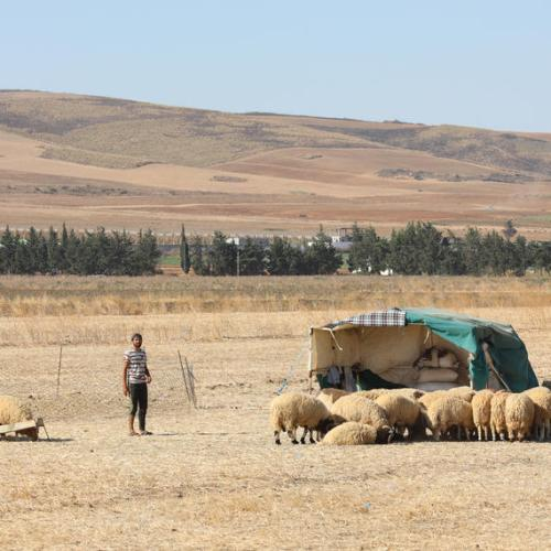 Tunisia militants behead shepherd near Algeria border