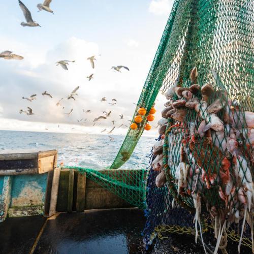 Scottish fishermen land fish in Denmark to avoid post-Brexit red tape