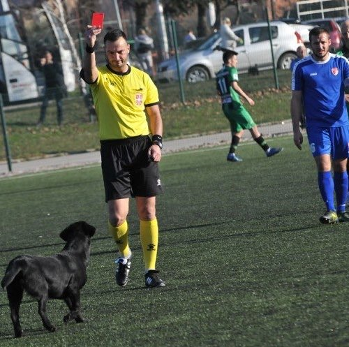 Dog sent off for invading pitch at Serbian football friendly