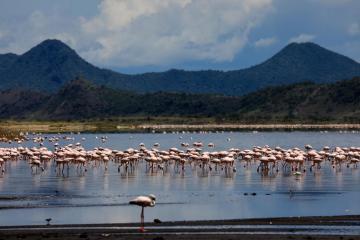 Photo Story – Power lines said to be killing migratory birds at lake Magadi