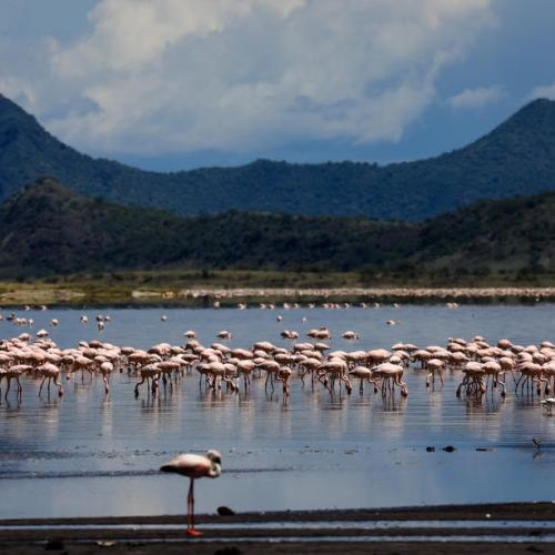 Photo Story – Power lines said to be killing migratory birds at lake Magadi
