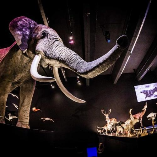 Photo Story: Naturalis voted European Museum of the Year