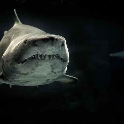 Shark Attack Thriller 'The Wreck' Sets Malta Shoot for September