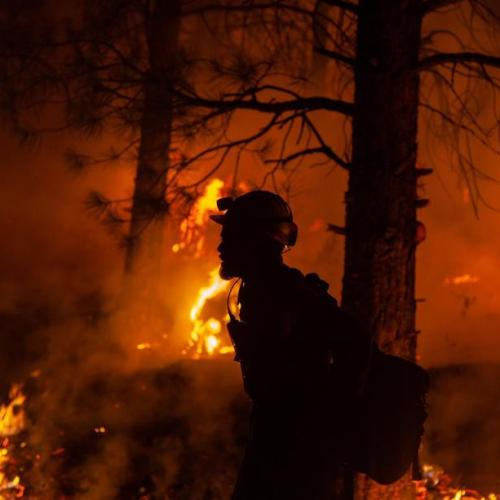 Extreme heat roasts Christmas tree crops in Oregon