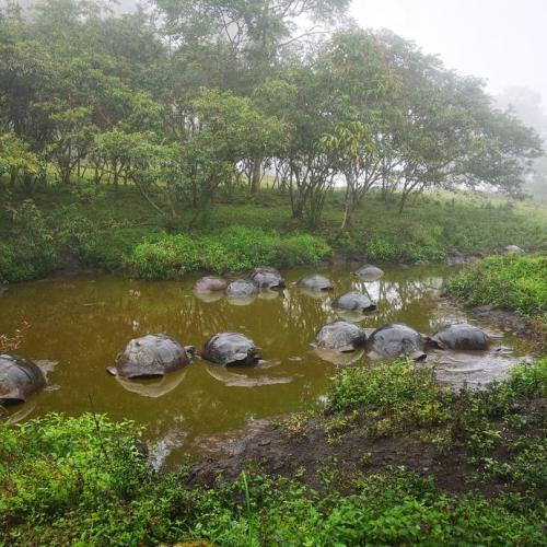 Photo Story – The giant tortoises in the Galapagos Archipelago, Ecuador