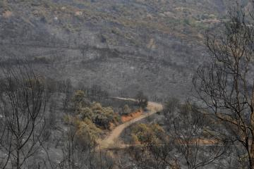 Algeria accuses groups it links to Morocco, Israel of setting wildfires