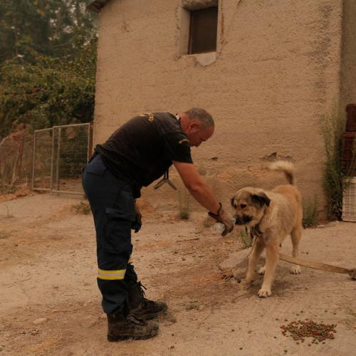 Photo Story: Helping the helpless in Greece