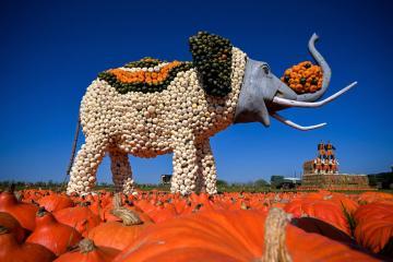 Photo Story: Pumpkin festival in Mechernich