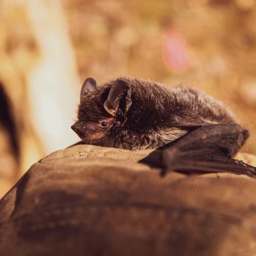 Cambodia bat researchers on mission to track origin of COVID-19