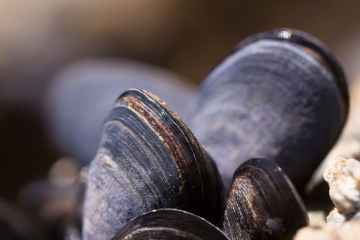 Extreme heat ravages Greece's mussel harvest