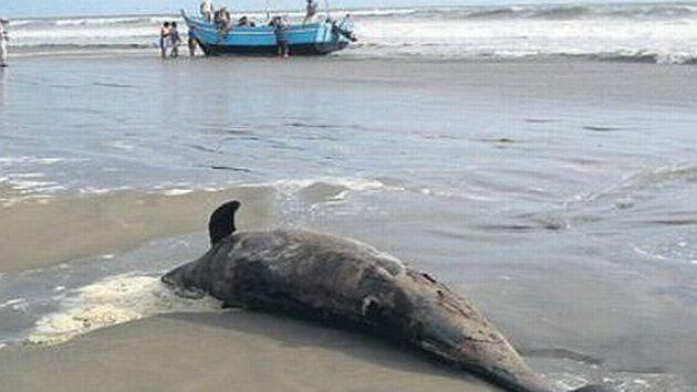 Los mamíferos pueden haberse intoxicado con anchovetas muertas. (Wilfredo Sandoval / El Comercio)