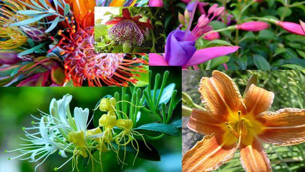Flora des amazonas regenwald anca24 deutsch for Vivero de plantas exoticas