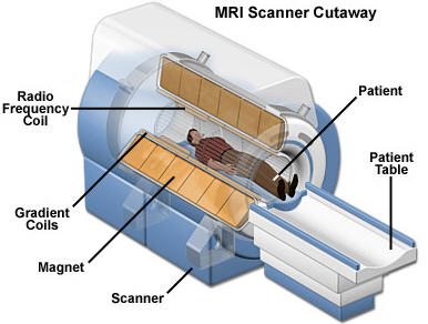 MRI shows contrast between the different soft tissues of the body ...