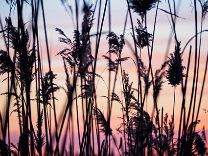 Long Point, Lake Erie, Discover Ontario, Parks Ontario, landscape photography, Toronto photographer