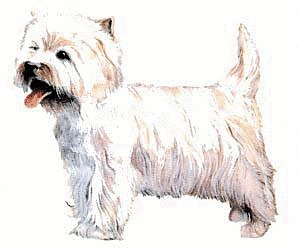 Free West Highland White Terrier Clipart Free Clipart