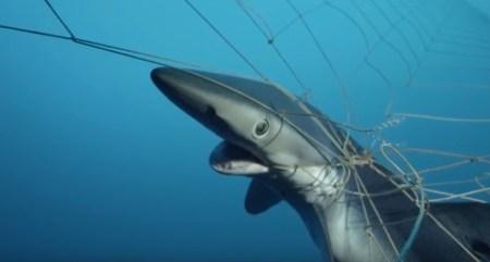 「流し網 クジラ」の画像検索結果