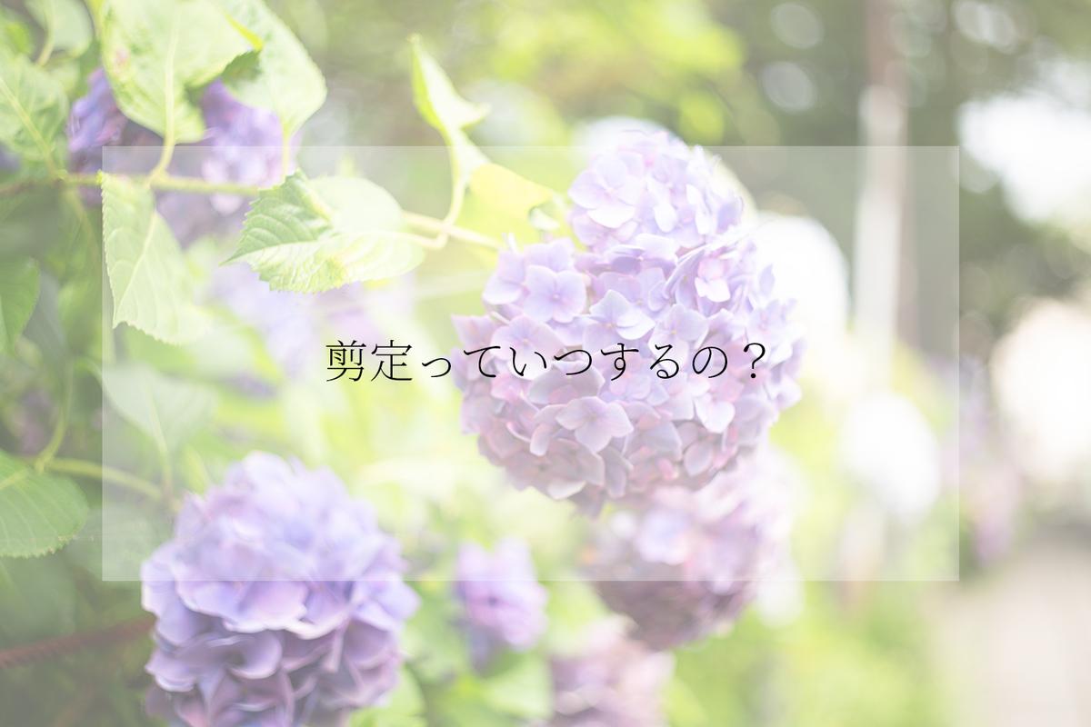 f:id:kazuto47:20190804024842j:plain