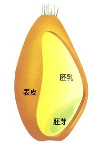 f:id:kumabokuhakuma:20200122100105j:plain