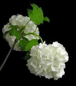 f:id:kyou2:20121218002840j:image
