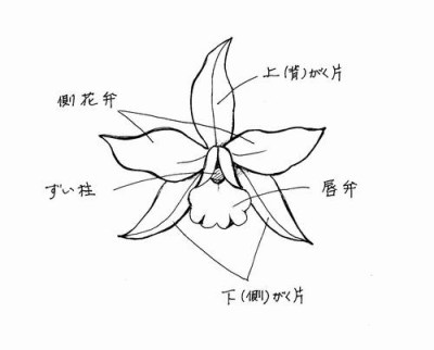 f:id:kyou2:20150530170721j:image:w400