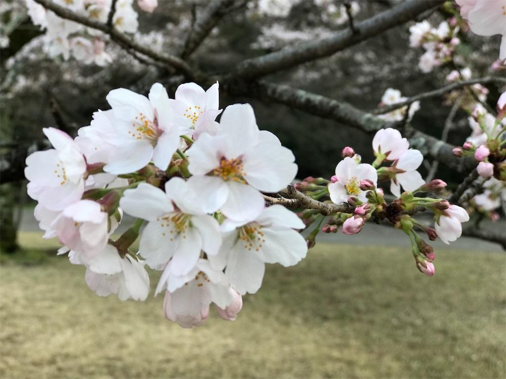 f:id:mika-shimosawa:20170409215128j:image