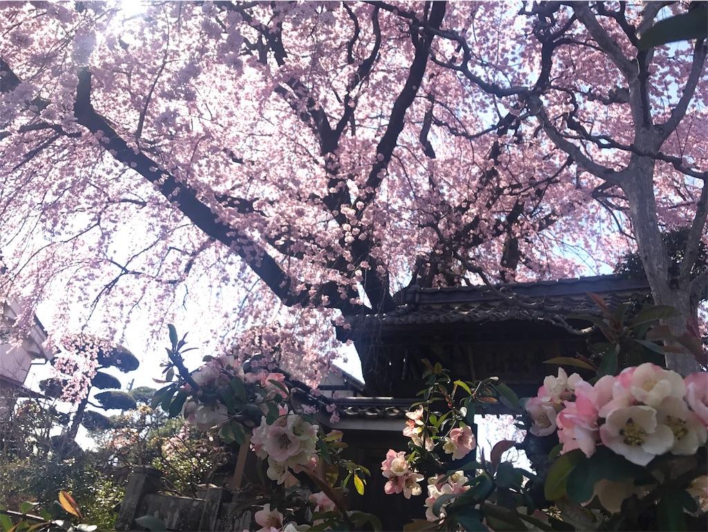 f:id:mika-shimosawa:20170413192220j:plain