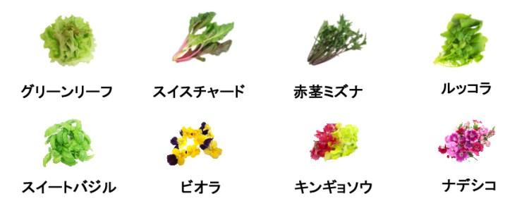 f:id:tsuritsuri:20190217000947j:plain