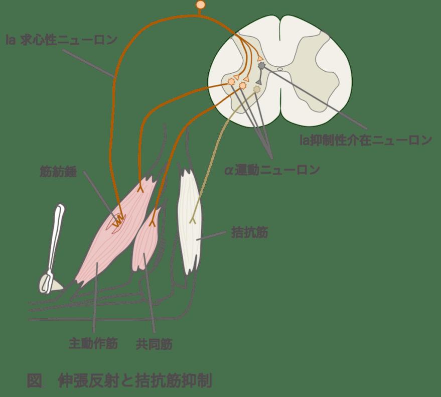 f:id:yoshimatsutakeshi:20160412224127p:plain:w400