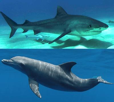 サメとイルカ