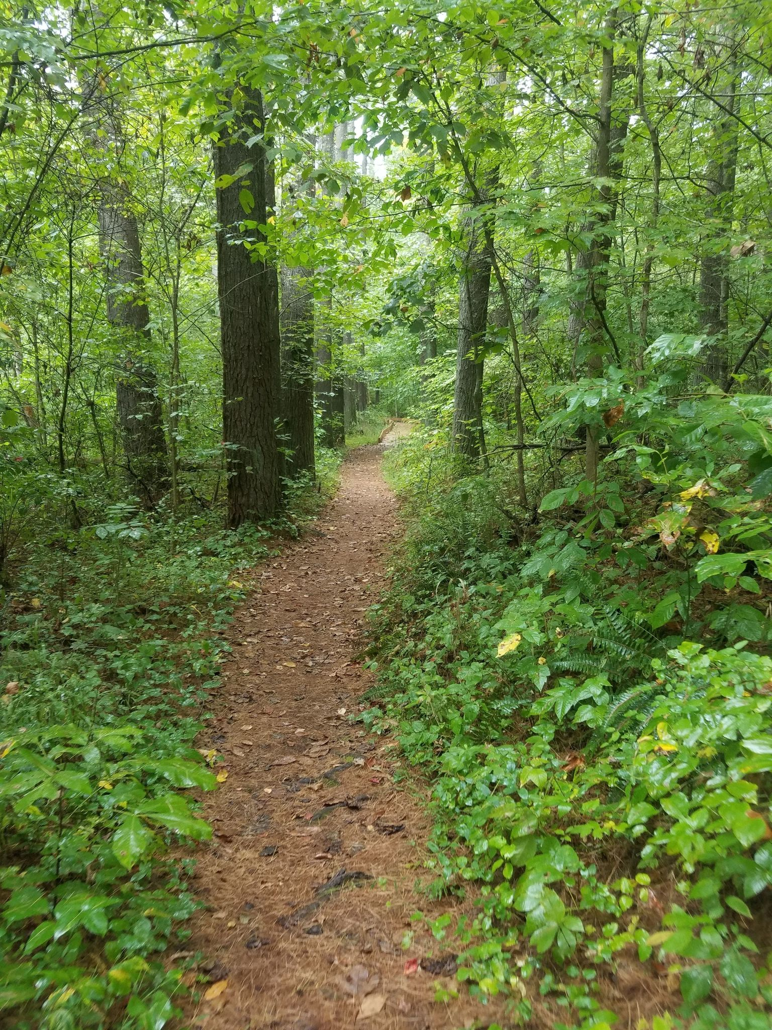 Best Trails In Yellowwood State Forest