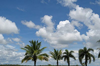 Sky, clouds and palm trees