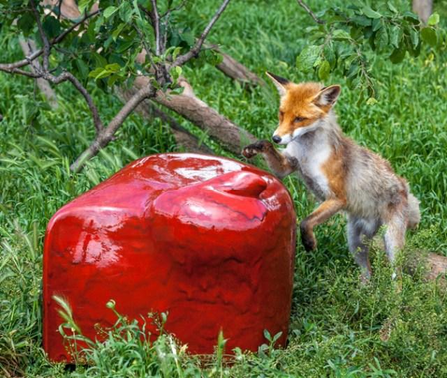 Edit Szabo Tame Beast Seats Ceramic Sculpture Animals Furniture Budapest Hungary Designboom