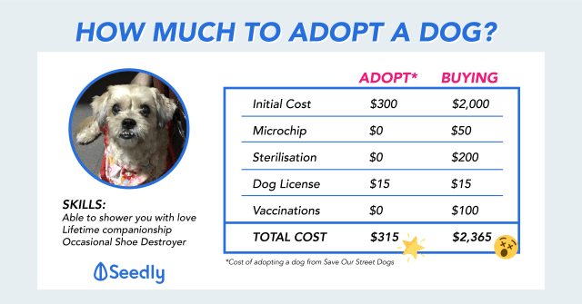 Save Almost $2,000 When You Choose To Adopt Instead Of Buying A Pet Dog In Singapore