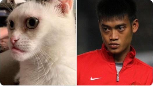 Cocoklogi tingkah seleb dengan kucing Twitter/@gudsluks