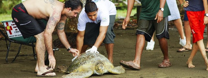 Eco-Friendly Costa Rica Image: Volunteers are seen caring for a sea turtle.
