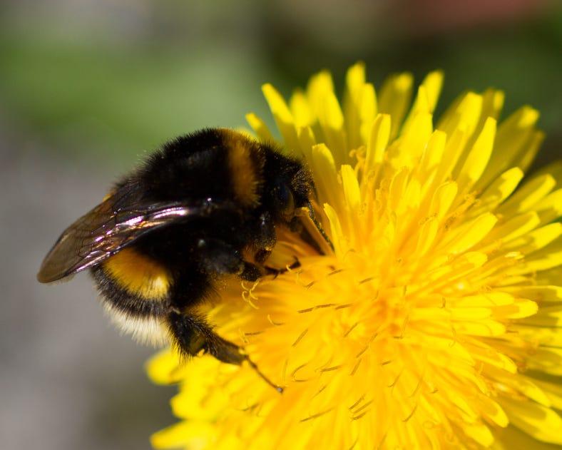 Another Cute Bumblebee Short Stories Medium