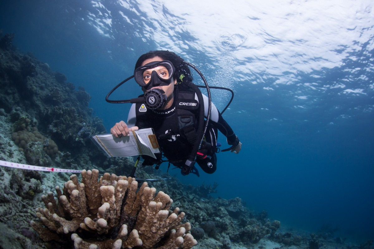 Technology Can Help Pick Up The Pace To Protect Coral Reefs