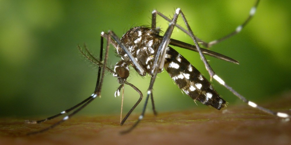 Image result for New drug for recurring malaria