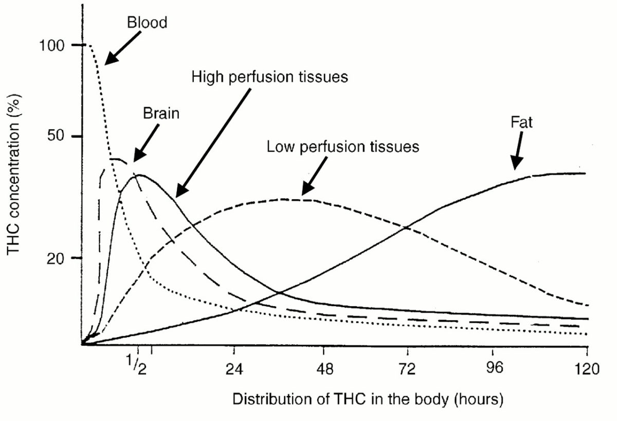 Human Metabolism Of Thc Sapiensoup Medium