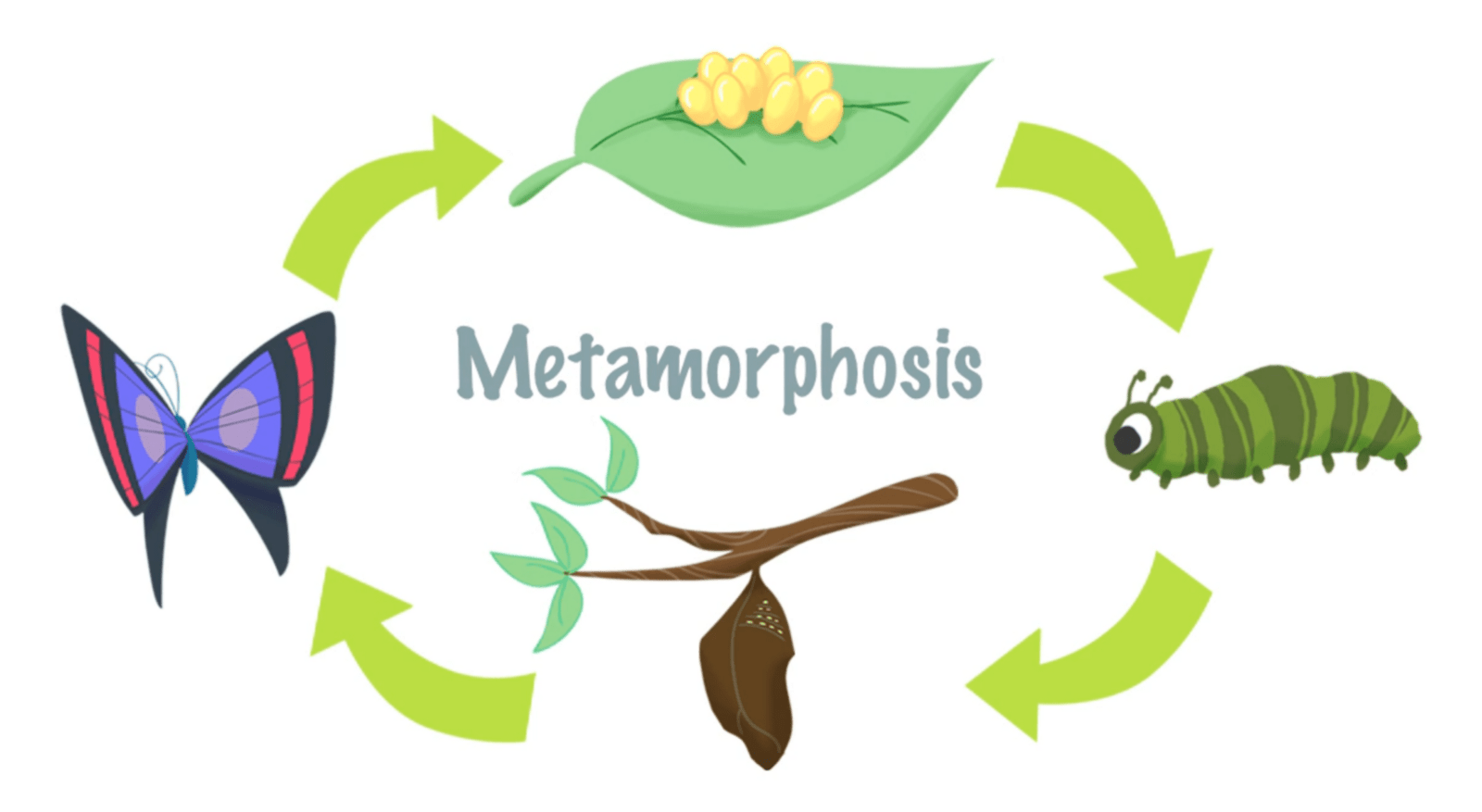 Mini Lesson Plan Metamorphosis Littlelives