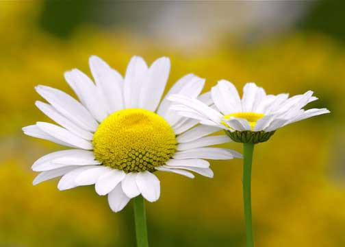 Pictures of small white flowers and their names jidiwallpaper what do flowers symbolise john atkinson medium mightylinksfo