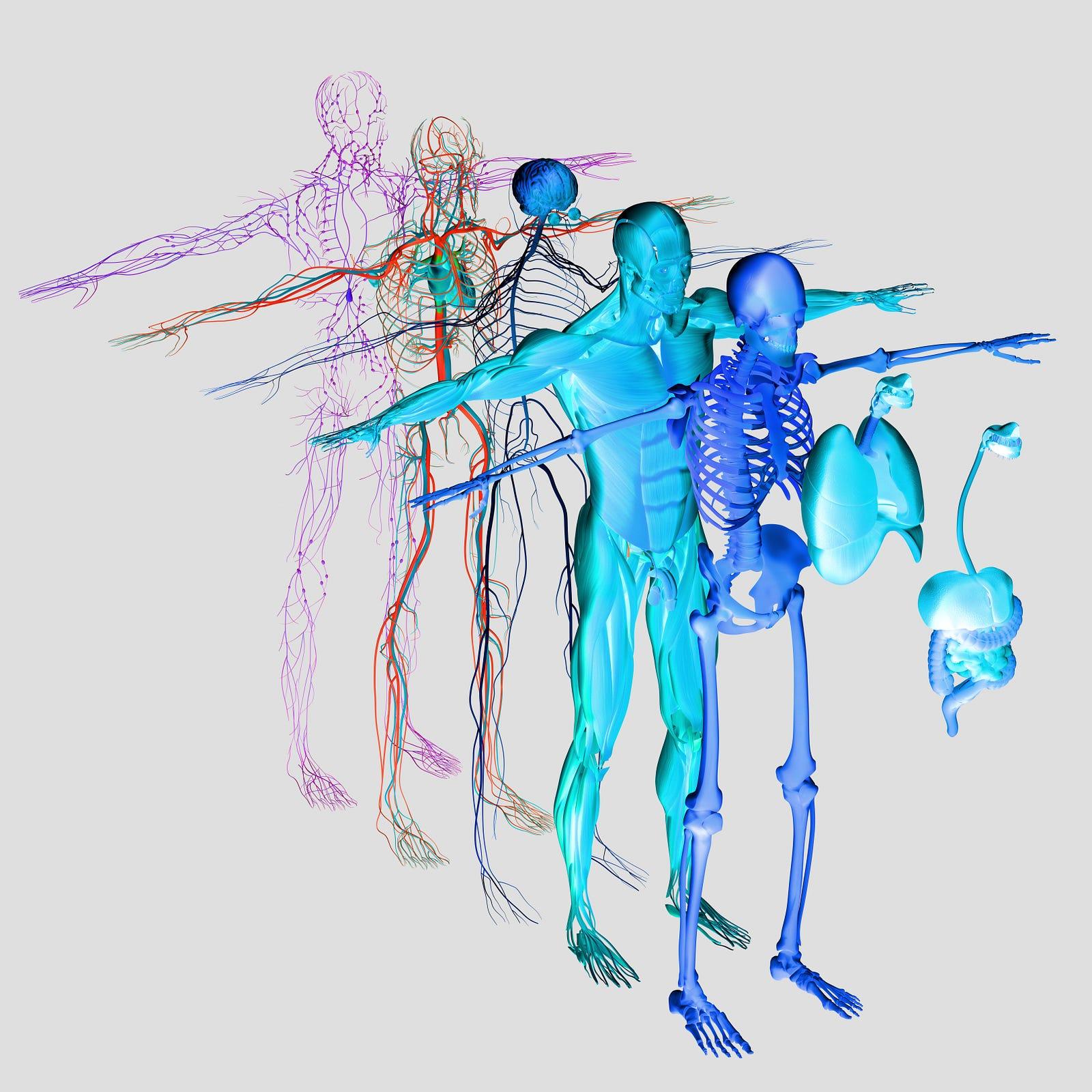 Homework Helper Body Systems The Beaker Life