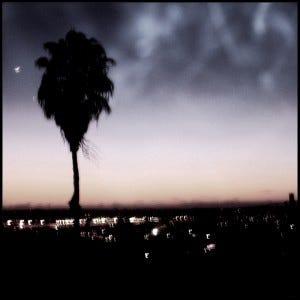 moody palm tree
