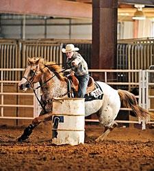 Fl Court Denies Barrel Racing Ban Rehearing Bloodhorse
