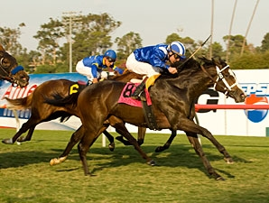 Habaya Has It Covered In Miesque Win Bloodhorse