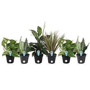 6pk Costa Farms Plants $32 Shipped
